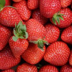 """Frutillas frescas """"TAMARA"""""""